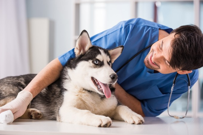 dog insure insurance