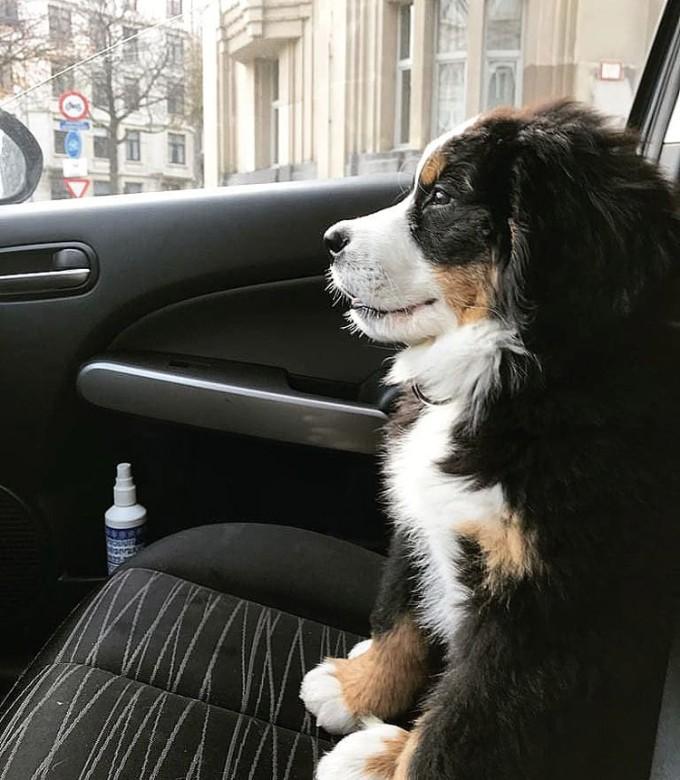 hond verzekeren verzekering