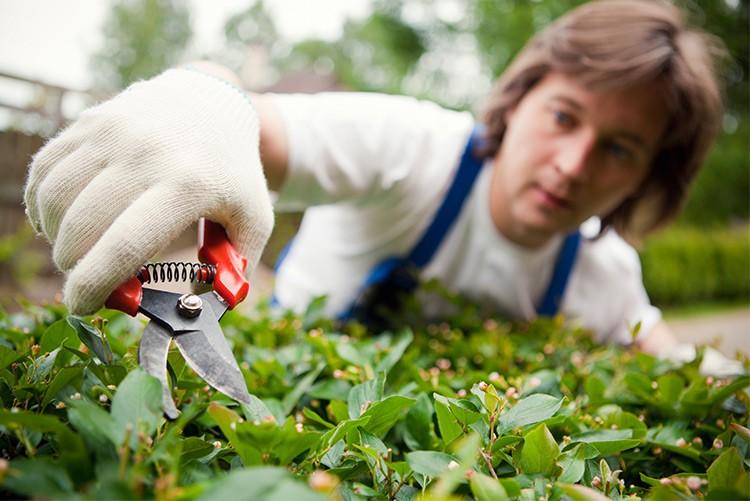 Garden Insurance